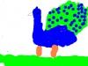 minpins_-_drawing_peacocks_5