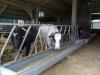 Farm Visit (100)