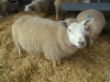 Farm Visit (103)