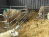 Farm Visit (104)