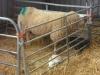 Farm Visit (108)
