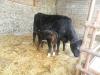 Farm Visit (109)