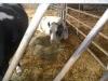 Farm Visit (115)