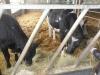 Farm Visit (117)