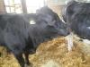 Farm Visit (118)