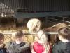 Farm Visit (17)