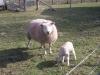 Farm Visit (28)