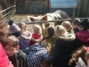 Farm Visit (32)