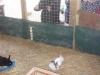Farm Visit (33)