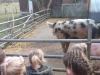 Farm Visit (6)