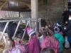 Farm Visit (62)