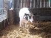Farm Visit (64)