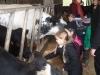 Farm Visit (70)