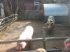 Farm Visit (8)