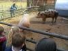 Farm Visit (95)