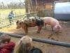 Farm Visit (96)