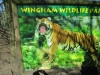 Wingham Wildlife Park (13)