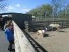 Wingham Wildlife Park (14)