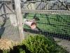 Wingham Wildlife Park (15)