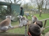 Wingham Wildlife Park (19)