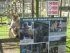 Wingham Wildlife Park (22)