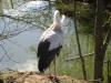 Wingham Wildlife Park (31)