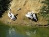 Wingham Wildlife Park (35)