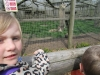 Wingham Wildlife Park (44)