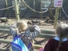 Wingham Wildlife Park (7)