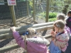 Wingham Wildlife Park (8)