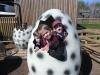 Wingham Wildlife Park (81)