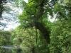 Brockhill Park (5)