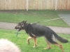 Police Dogs (25)