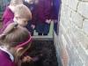 Onion Planting (2)
