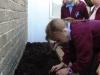 Onion Planting (4)