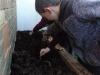 Onion Planting (6)