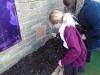 Onion Planting (7)