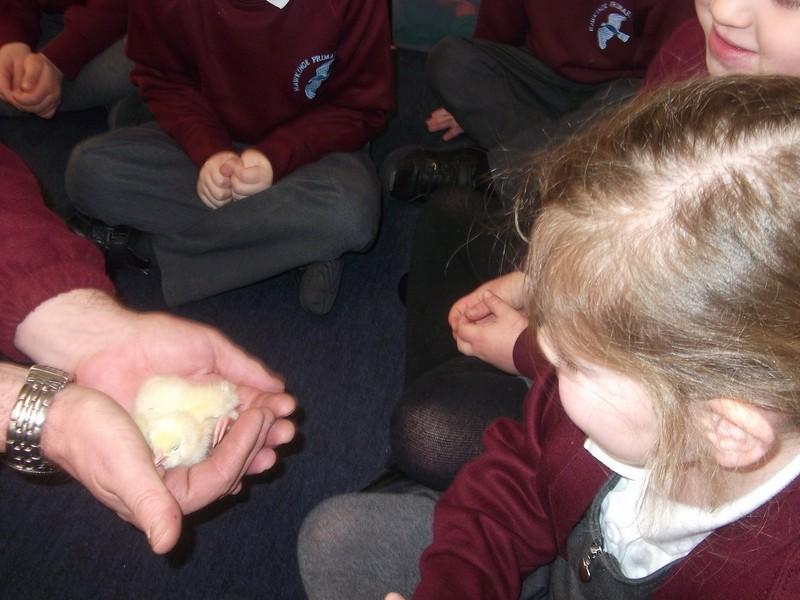 Reception Chicks (6)