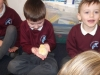 Reception Chicks (9)