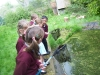 pond-dipping-1